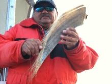 Une dent de baleine presentée par notre capitaine