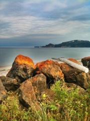 algues oranges sur les rochers